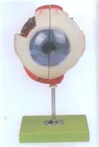 上等眼球放大模型帶支架   GD/A17102
