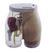 上等臀部肌肉注射及對比模型 KAH-TB