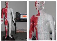 感應多媒體人體針灸穴位發光模型 MAW-170E
