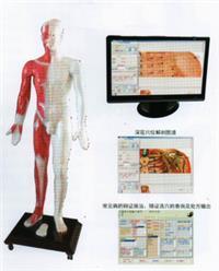 上海多媒體人體針灸穴位發光模型 MAW-170E