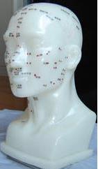 頭部四功能針灸腧穴模型 26CM