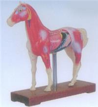 上海馬體針灸模型