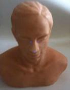 針灸頭部訓練模型    1000TS