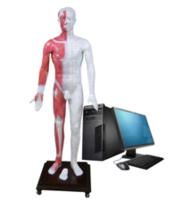 光電感應多媒體人體針灸穴位發光模型 MAW-170E