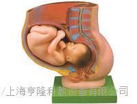 骨盆含妊娠九個月胎兒模型 KAH/A21017