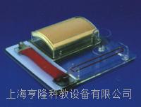 上等外科多技能訓練模型 KAH/LV9