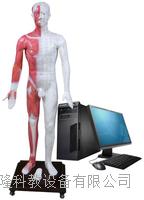 光電感應多媒體人體針灸穴位發光模型 ZKMAW-170E