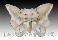 女性骨盆模型 KAH/A11128