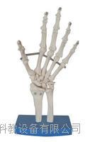 手關節模型 KAH/A11201-3