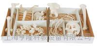 未組裝全身散骨模型 KAH/A11103