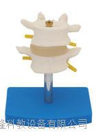 正常腰椎組合(二節) KAH/A11109/1