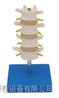 正常腰椎組合(四節) KAH/A303B