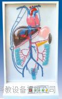 門靜脈側支循環電動模型