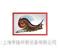 蝸牛解剖浮雕模型 KAH2079-29