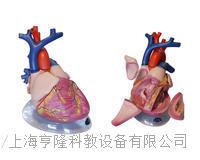 心髒解剖 KAH2080