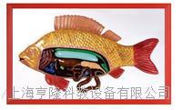 魚解剖浮雕模型 KAH2079-28