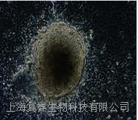 美国MEFs (CF1)小鼠胚胎成纤维细胞  PCEMM02