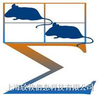 SuperMaze+高通量動物行為實驗分析軟件