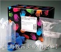 熱電 Thermo Scientific PCR緩沖液