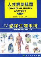 人體解剖掛圖-泌尿生殖系統(18張) 紙制