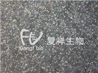 Chang liver 人张氏肝细胞 CCL-13