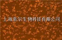 P19细胞 小鼠睾丸畸胎瘤细胞 P19细胞价格