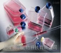 P388D1细胞(小鼠**样瘤细胞)P388D1细胞