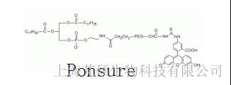 荧光素PEG-磷脂